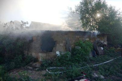 v-zaporozhskoj-oblasti-vo-vremya-pozhara-sgorelo-14-porosyat.jpg