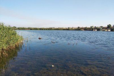 v-zaporozhskoj-oblasti-vodolazy-vytashhili-iz-stavka-telo-muzhchiny.jpg