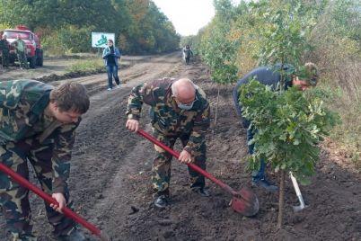 v-zaporozhskoj-oblasti-vysadili-bolshe-100-tysyach-derevev.jpg