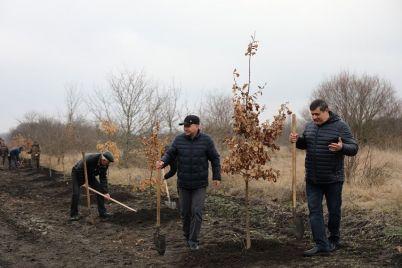 v-zaporozhskoj-oblasti-vysadili-novyj-uchastok-lesa-s-simvolichnym-kolichestvom-derevev.jpg