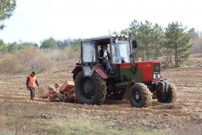 v-zaporozhskoj-oblasti-vysadili-pochti-poltysyachi-gektarov-lesa.jpg