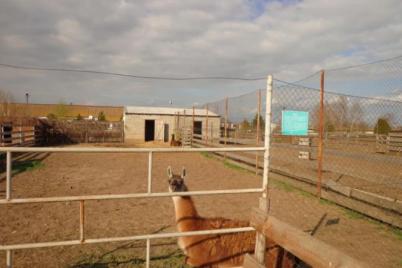 v-zaporozhskoj-oblasti-za-300-tysyach-dollarov-prodadut-izvestnuyu-fermu-i-zoopark.png