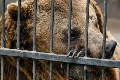 v-zaporozhskoj-oblasti-zhivet-medved-kotorogo-sud-postanovil-usypit-foto.jpg