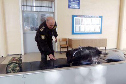 v-zaporozhskom-aeroportu-sluzhebnyj-pes-nashel-v-bagazhe-passazhira-nezadeklarirovannuyu-valyutu.jpg