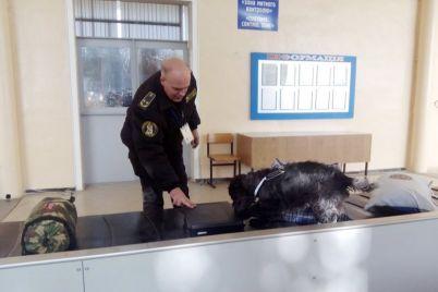 v-zaporozhskom-aeroportu-venera-pomogla-grazhdaninu-lishitsya-chasti-dollarov.jpg