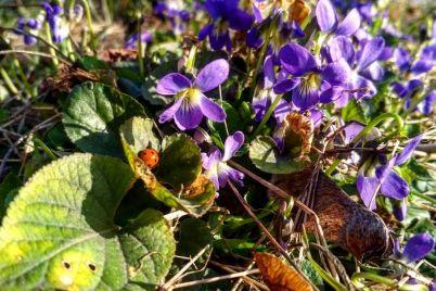 v-zaporozhskom-botanicheskom-sadu-bujstvuet-vesna-fotoreportazh.jpg