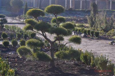 v-zaporozhskom-botanicheskom-sadu-poyavilsya-yaponskij-ugolok-foto.jpg