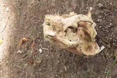 v-zaporozhskom-parke-byli-najdeny-ostanki-video.jpg