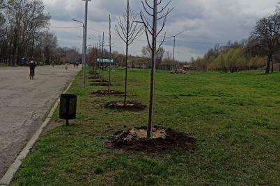 v-zaporozhskom-parke-vysadili-25-molodyh-lip-foto.jpg