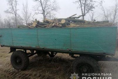 v-zaporozhskom-rajone-pilili-pod-koren-lesoposadki-i-gruzili-v-traktornye-priczepy.jpg