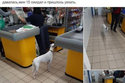 v-zaporozhskom-supermarkete-sobaka-neskolko-chasov-iskala-hozyaina-foto.jpg