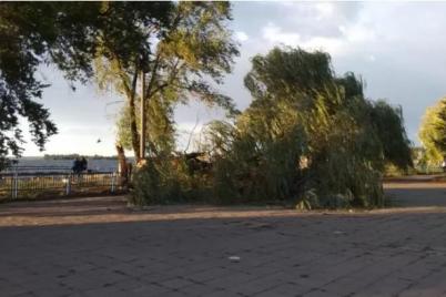 veter-razbushevalsya-v-portu-upalo-ogromnoe-derevo-1.png