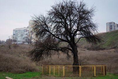 vozle-voznesenovskogo-rynka-postroyat-tcz-mestnyh-zhitelej-zovut-na-obsuzhdenie.jpg