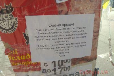 vozmite-v-semyu-zaporozhczev-prosyat-priyutit-porodistuyu-sobaku-foto.jpg