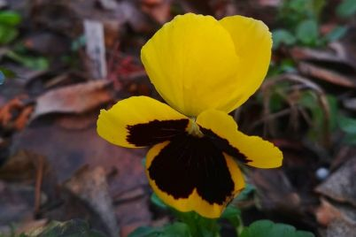 vremya-goda-pereputali-v-botanicheskom-sadu-zaczvela-fialka-1.jpg