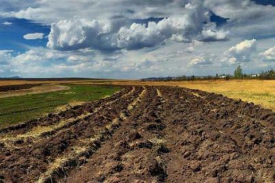 vrozhaj-2021-chomu-zaporizki-agrarid197-oberezhni-v-prognozah.jpg