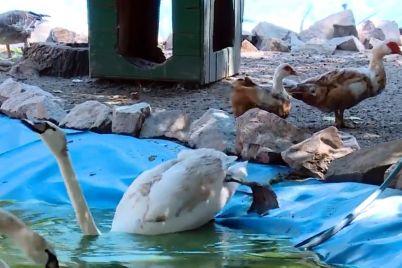 yak-praczivniki-zaporizkogo-zooparku-dopomagayut-tvarinam-vryatuvatisya-vid-speki.jpg