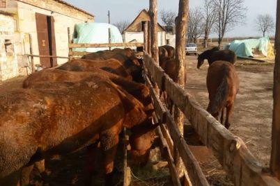 yak-tanczyuyut-koni-yakih-privezli-do-zaporizkod197-oblasti-z-avdid197vki-video.jpg