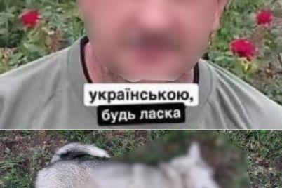 zabezhal-v-chuzhoj-dvor-v-zaporozhskoj-oblasti-zastrelili-shhenka-haski-foto.jpg