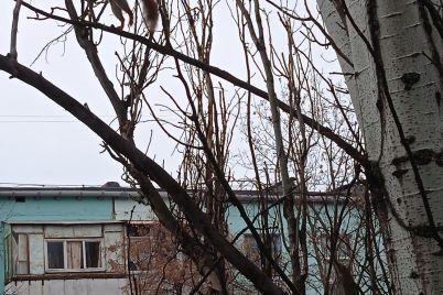 zaglyadyvayut-v-okna-v-spalnom-rajone-zaporozhya-vyprashivayut-edu-ruchnye-belki-foto.jpg