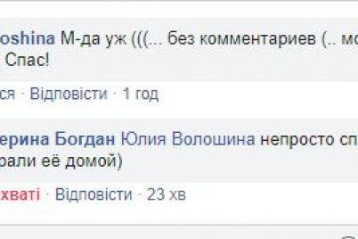 zaporizhecz-vryatuvav-dvoh-sobak-yakih-nevidomi-vikinuli-u-zavyazanomu-mishku-foto-video.jpg