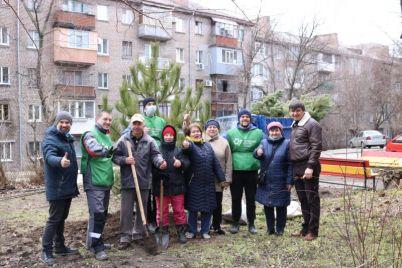 zaporizhzhya-stalo-zelenishim-na-100-krimskih-sosen-foto.jpg