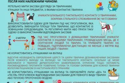 zaporozhczam-na-zametku-mozhno-li-zarazitsya-koronavirusom-ot-domashnih-zhivotnyh.jpg