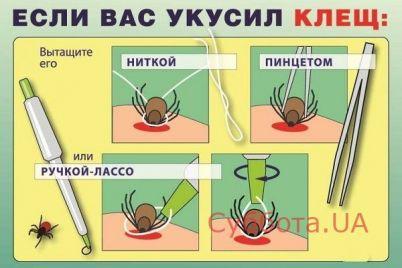 zaporozhczev-atakuyut-kleshhi.jpg