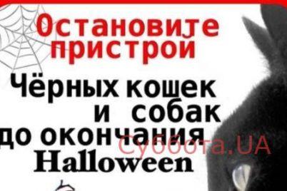 zaporozhczev-prosyat-ne-razdavat-zhivotnyh-pered-hellouinom.jpg