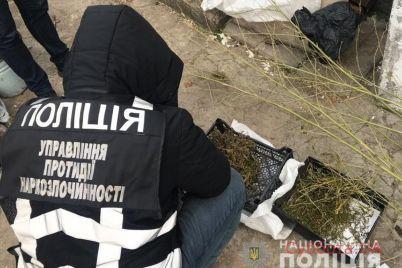 zaporozhskaya-policziya-prodolzhaet-istreblyat-narkomanov-foto.jpg