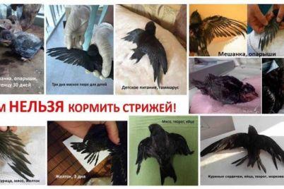 zaporozhskaya-zoozashhitnicza-rasskazala-chem-nelzya-kormit-pticz-foto.jpg