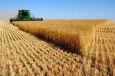 zaporozhskie-agrarii-sobrali-rekordnyj-za-gody-nezavisimosti-ukrainy-urozhaj.jpg
