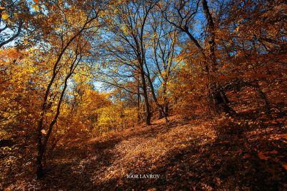 zaporozhskij-fotograf-pokazal-vsyu-prelest-oseni-v-krasochnyh-foto-foto.jpg