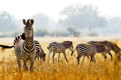 zaporozhskij-safari-skandal-razbiraemsya-v-situaczii.jpg