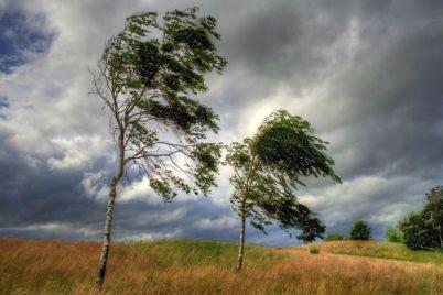 zaporozhskuyu-oblast-nakrylo-shtormovym-vetrom-pervye-pechalnye-posledstviya-foto.jpg