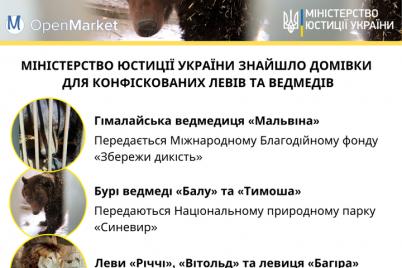 zavtra-pyat-medvedej-iz-vasilevskogo-zooparka-poedut-v-novyj-dom.png