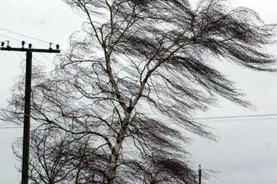 zavtra-v-zaporozhe-i-oblasti-budet-silnyj-veter-prognoz-pogody-na-nedelyu.jpg