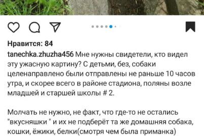 zhahlive-vidovishhe-u-zaporizkij-oblasti-potrud197li-bezpritulnih-sobak.jpg
