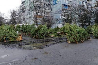zhalko-derevya-zaporozhe-prevrashhaetsya-v-kladbishhe-elok.jpg