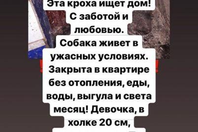 zhitelej-zaporozhya-prosyat-pomoch-spasti-sobaku-kotoraya-okazalas-zapertoj-v-kvartire-bez-edy-i-vody-foto.jpg