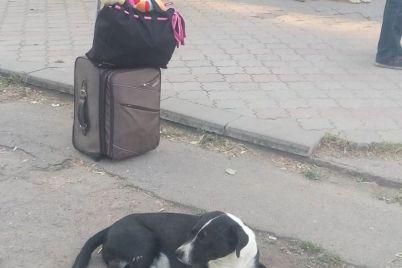 zhitelej-zaporozhya-pugayut-bezdomnye-sobaki.jpg
