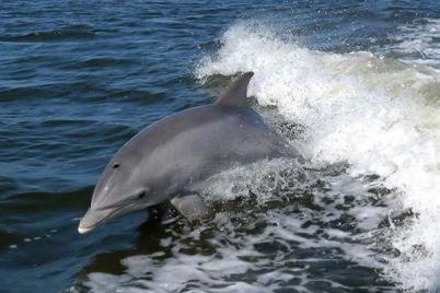 zimnee-chudo-na-azovskom-more-k-beregu-podplyli-delfiny-video.jpg