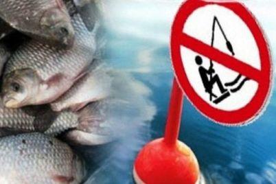 zimnyaya-rybalka-gde-nelzya-lovit-rybu-v-zaporozhskoj-oblasti.jpg